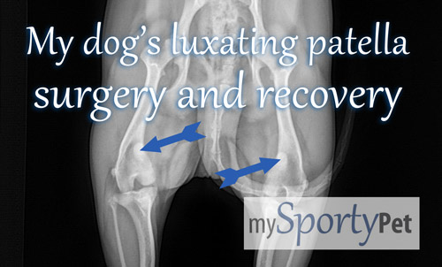 i have scheduled my dog s luxating patella surgery and made plans