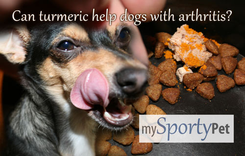 Can turmeric help dogs with arthritis? To find out, I fed